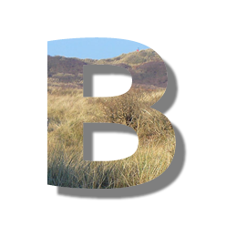 Seo Glossar - Buchstabe B